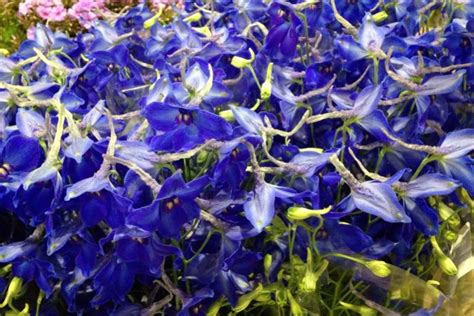 fiori giugno matrimonio i fiori migliori per un matrimonio a giugno lombarda flor
