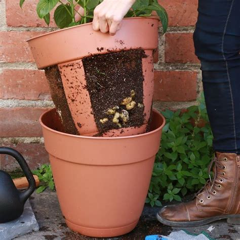 0 via nifty outdoors like our new page this easy harvest potato planter is perfect for small