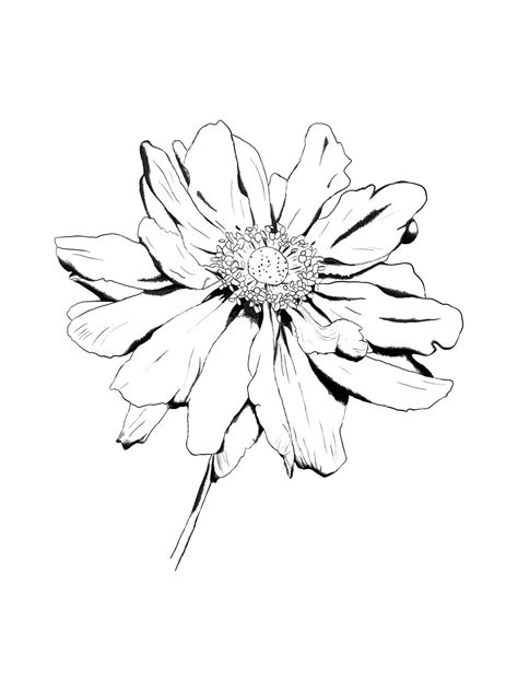 Drawings Of Flowers by Flower Drawing By Kingrowena On Deviantart