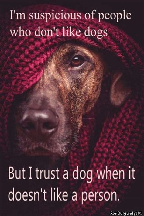 i don t like dogs popular i m suspicious of who don t like