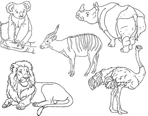 coloring book pages zoo animals childhood beckons safari with whittle world