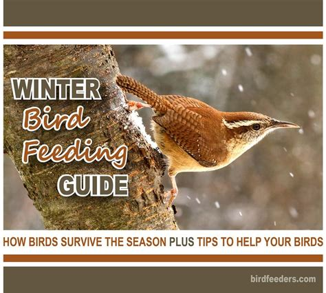 backyard bird feeding tips best 25 feeding birds in winter ideas on pinterest traditional bird feeders