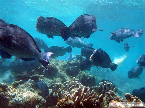 Mabul Inn Semporna Malaysia Asia sipadan world class scuba diving in malaysian borneo