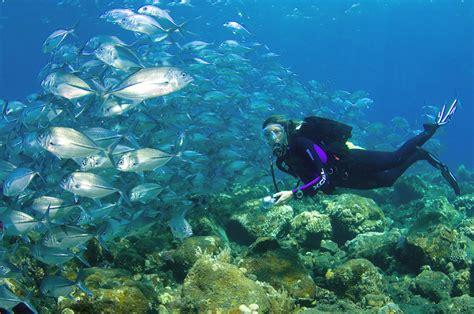 dive places top 10 best places to go scuba diving