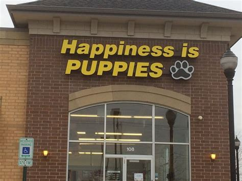 happiness is puppies no more happiness is pets not so fast