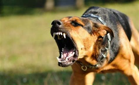 angry dogs dies of bite in cross river