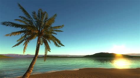 background for photos tropical background loop motion background
