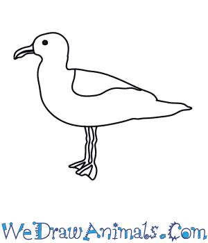 how to draw sea birds drawn seagull gull 3431807