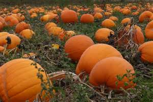 pumpkin patches fall classic updates from the road