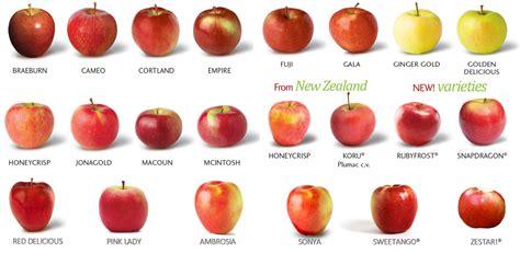 apple varieties names of apple varieties related keywords suggestions