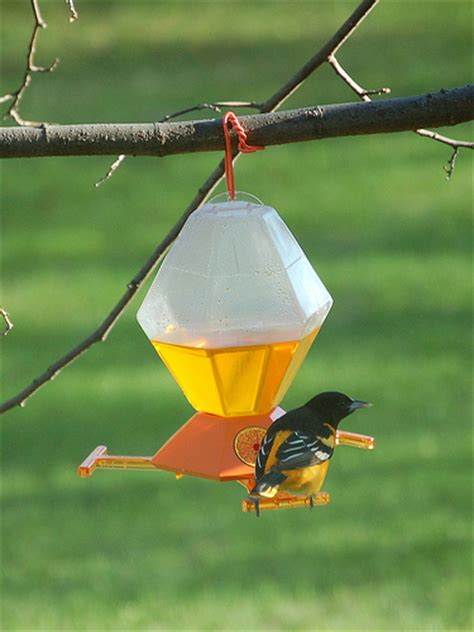 baltimore oriole on bird feeder flickr photo sharing