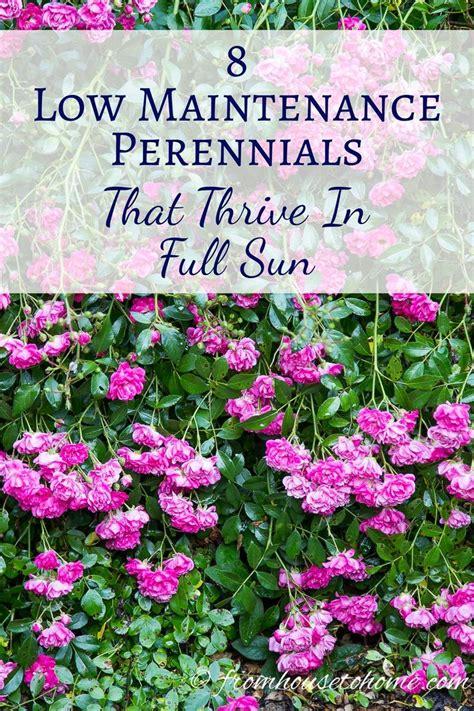 low maintenance flower garden best 20 sun plants ideas on sun