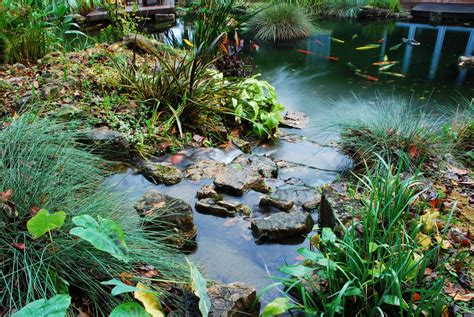 Backyard Fish Pond Maintenance Koi Filters Amp Koi Pond Systems With Self Cleaning Filters