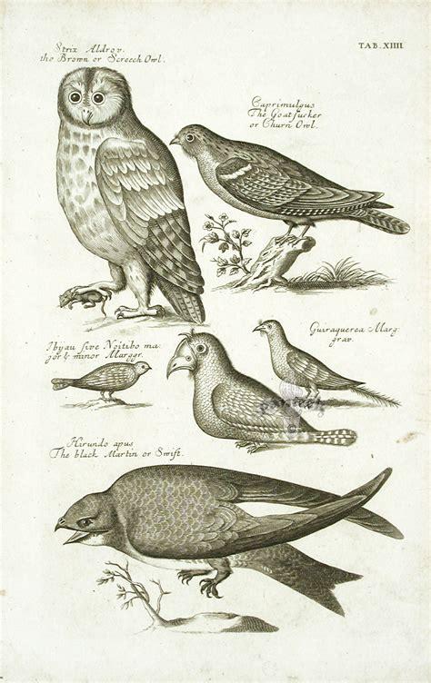 image gallery ornithology