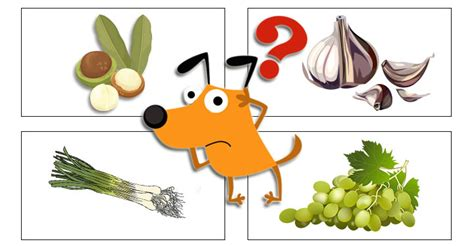 is garlic bad for dogs is this ingredient a part of your s diet