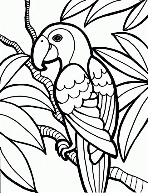 beautiful birds coloring pages coloring pages