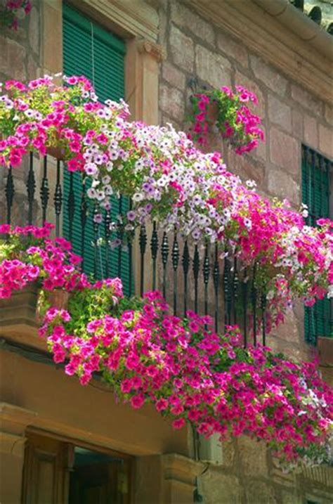 best window boxes best plants for window boxes