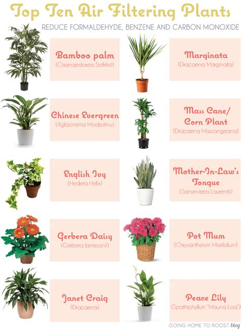 Best Indoor Plants For Oxygen by Top 10 Air Filtering Plants Going Home To Roost