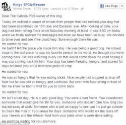 letter to owner he waited for you scathing letter from animal rescue slams heartless scumbag for
