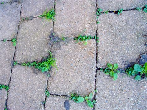 Patio Pavers Weeds How To Keep Weeds From Growing In Pavers Get Rid Of