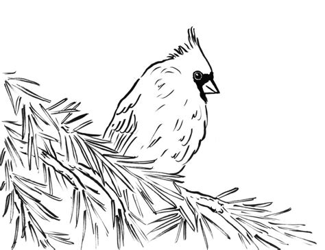 winter cardinal coloring page cardinal color page www imgkid com the image kid has it