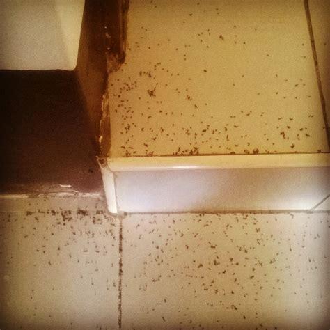 carpenter ants dead on floor ants in kitchen floor wow