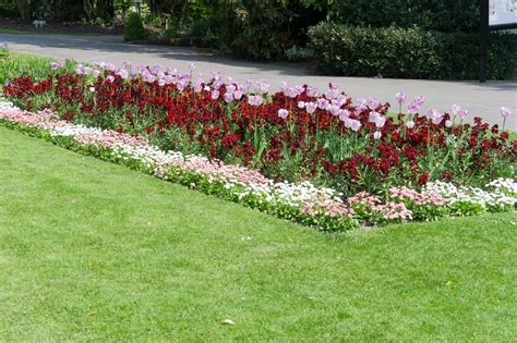 flower bed borders how to create borders with flowers and other plants