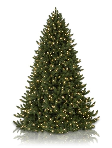 2016 vermont white spruce led christmas trees balsam