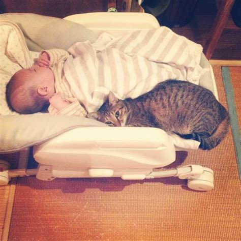 utterly adorable baby  animal friendships page    wildlife insider