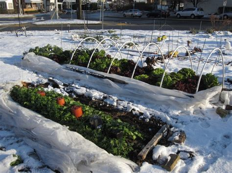 winter backyard what to plant in your winter vegetable garden pacific northwest edition seedwise