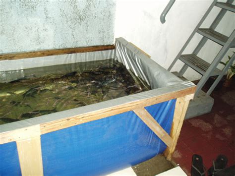 Jual Terpal Kolam Ikan Di Medan budidaya dan pembibitan ikan patin pasopati