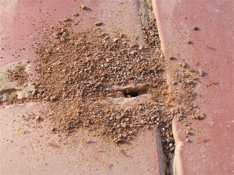 Ameisen Auf Der Terrasse 4711 by Tiereimchaco