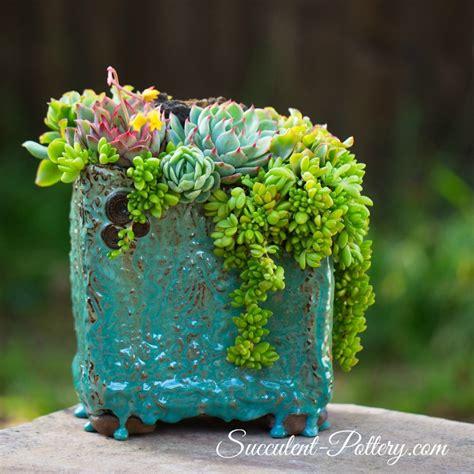 Textured Wall Ideas succulent pottery com home