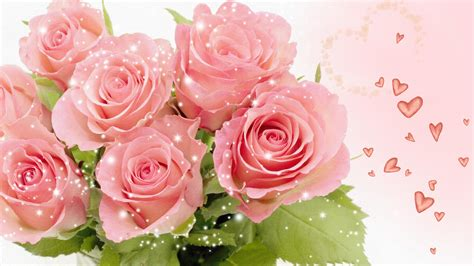 how to join pink fan pretty pink roses wallpaper pink color photo 34590812