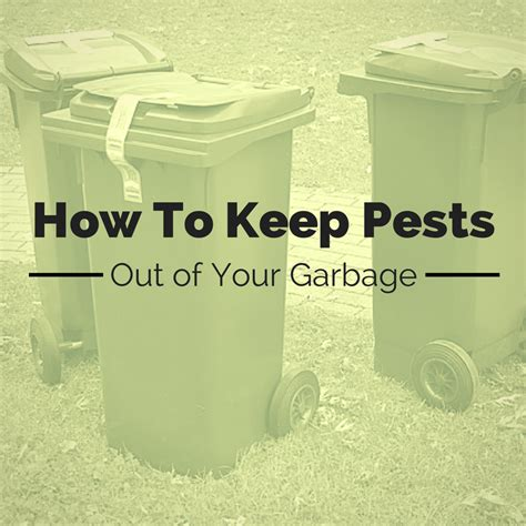 how to keep spiders out of your bed keeping your garbage cans save from pests home pest control