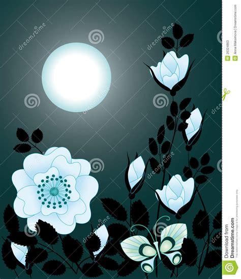 fiori di notte fiori di notte fotografie stock immagine 26324863