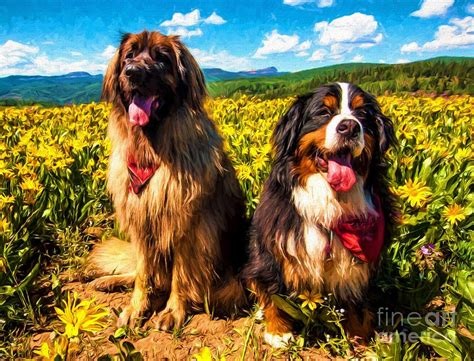 bernese mountain utah bernese mountain and leonberger among wildflowers painting by gary whitton