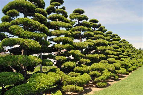 cool trees united nations memorial cemetery korea korea