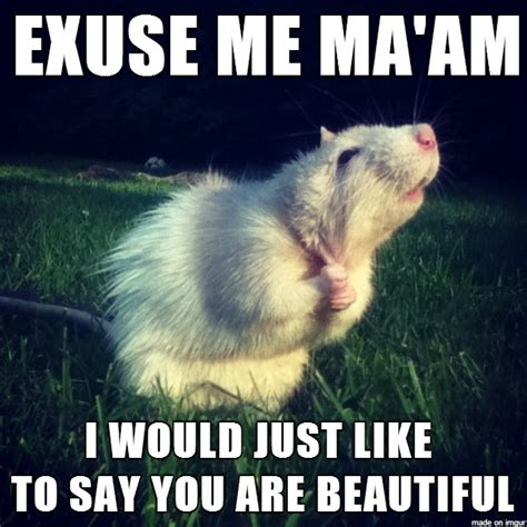 Romantic Meme - complementary rat meme is a little shy when it comes to