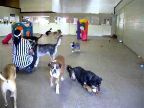 kennels colorado springs boarding kennel funnydog tv