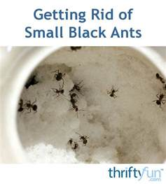 how to get rid of small ants in bathroom small black ants in bathroom infestation of black