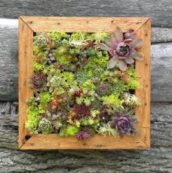 succulent vertical living wall art kit by so succulent eclectic plants by etsy