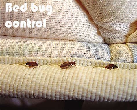 Bed Bugs In Mattress Removal by Ocp Pest California Termite Extreminator