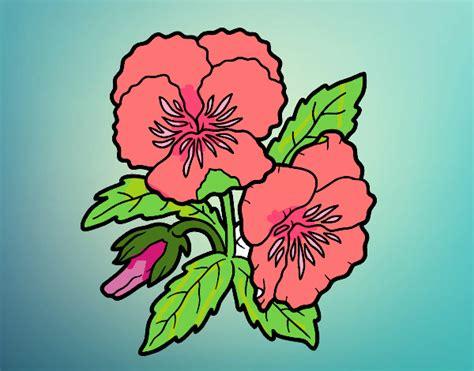 fiori di pensiero disegno fiori di viola pensiero colorato da utente non