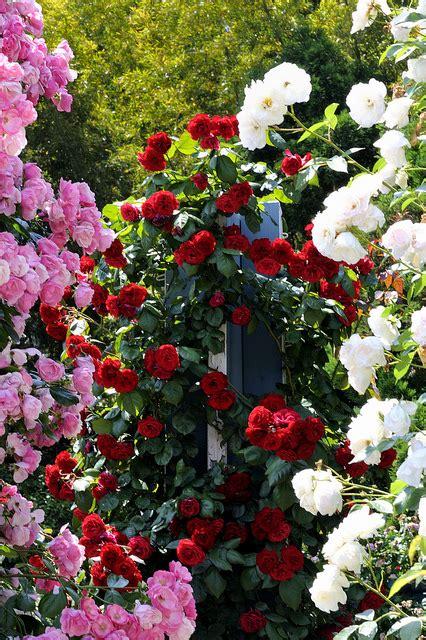 バラ庭園 霊山寺 rose nara and gardens