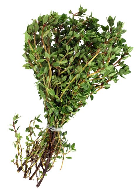 Thyme Herbs harvesting thyme and how to thyme