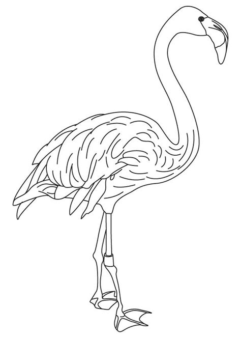 coloring pages of indian feathers free coloring pages indian feather colouring pages