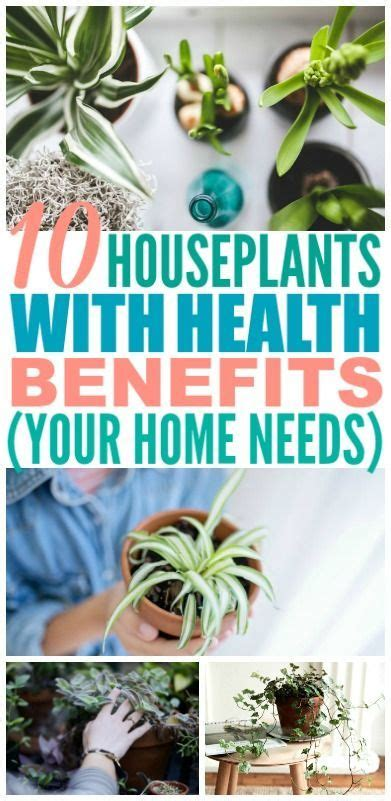 houseplants   good   health  images