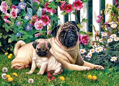 are pugs family dogs pug family dogs f dogs animals background wallpapers on desktop nexus image