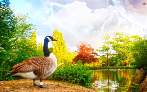 Swan bird near lack beautiful nature   New hd wallpaperNew hd wallpaper